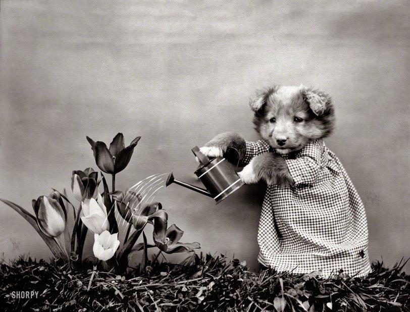 Puppy Garden: 1914