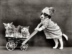 All My Kittens: 1914