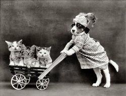 All My Kittens: 1914