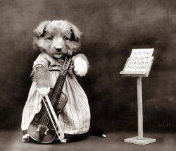 Puppy Prodigy: 1914