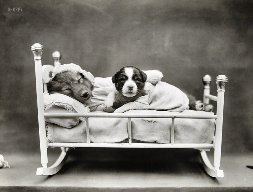 Rock-a-Bye Puppy: 1914