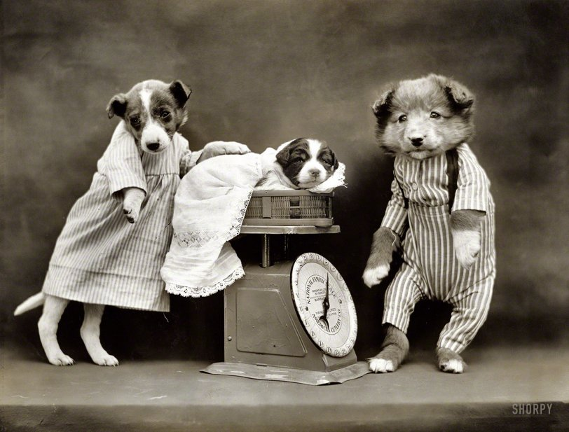 Dog-Pounds: 1914