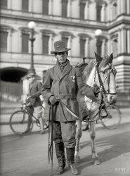 Red Fox: 1915