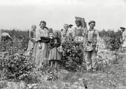 Bottomley's Berry Farm: 1909