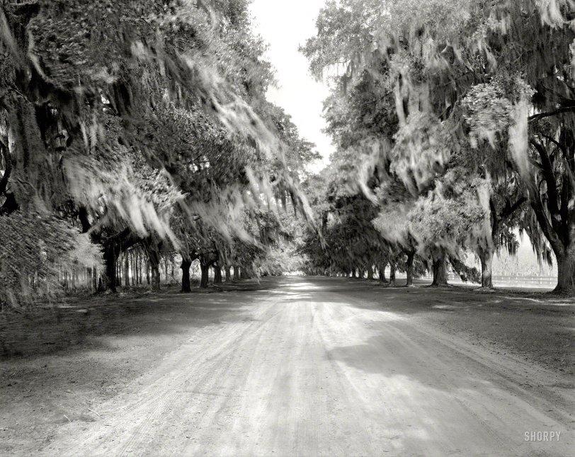 Avenue of Oaks: 1938
