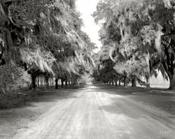 Avenue of Oaks: 1938