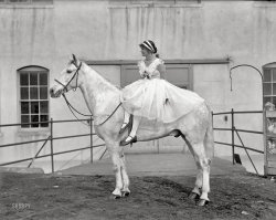 The White Stallion: 1916