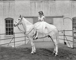 The White Stallion: 1916