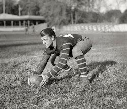 Handsome Hoya: 1925