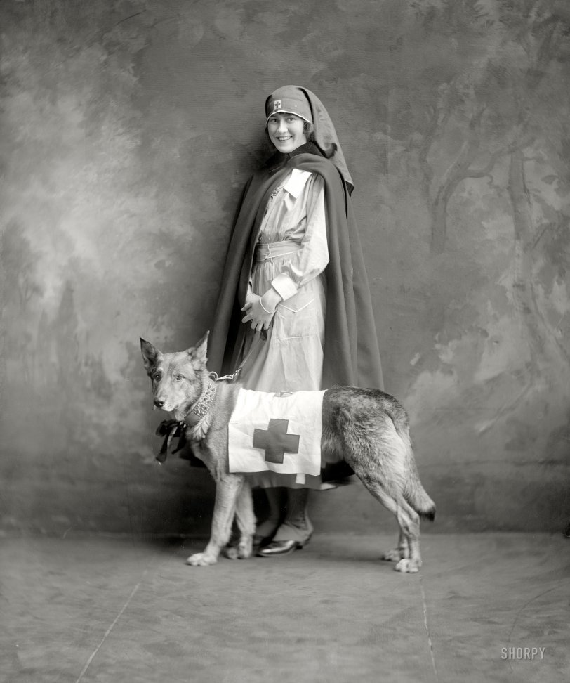 Red Cross Dog: 1917