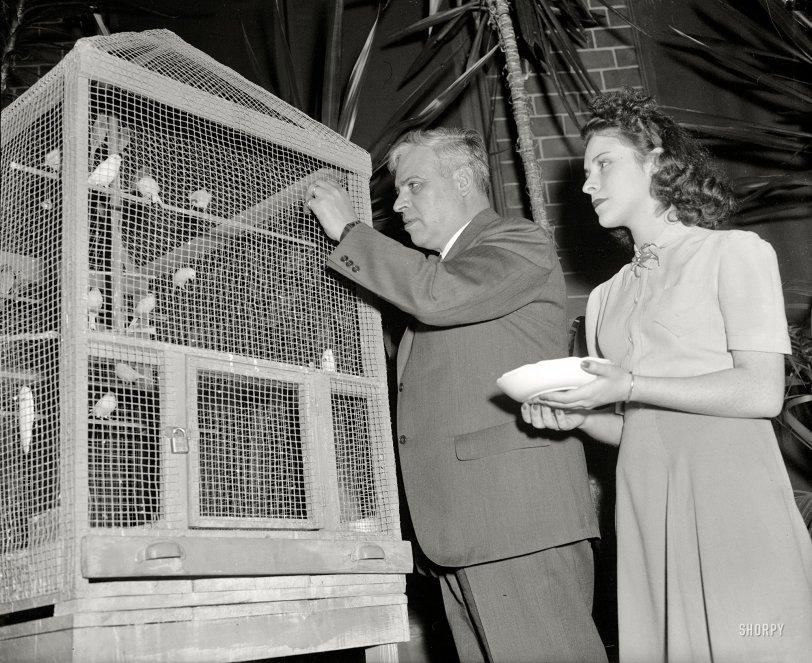 The Birds: 1939