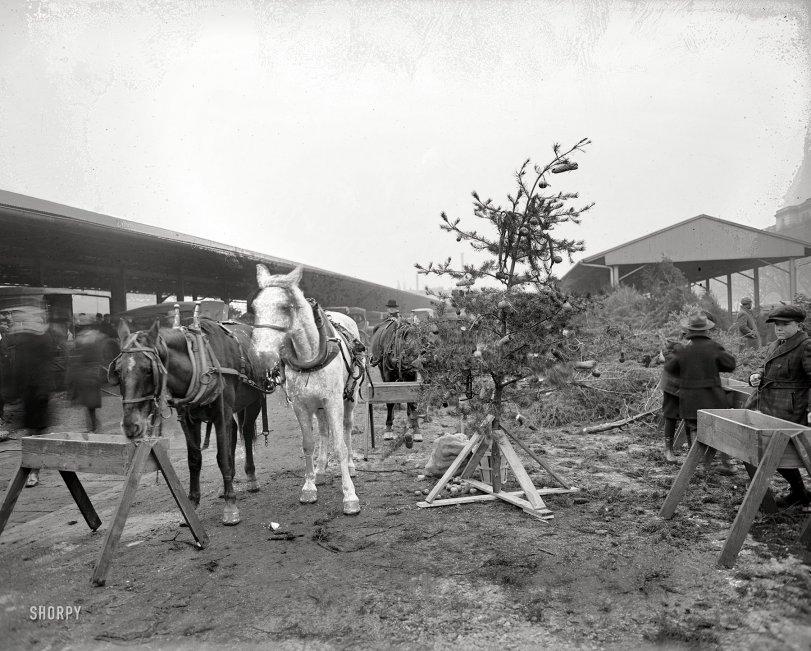 Horse Christmas Tree: 1919
