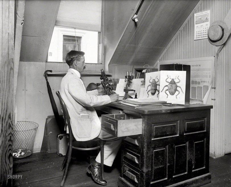 Meet the Beetles: 1920