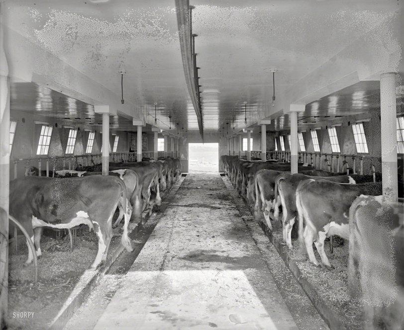 Farm-Fresh: 1925