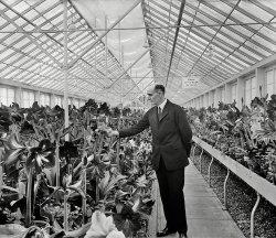 Flower Power: 1925