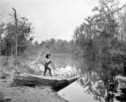 Rice Creek: 1890s