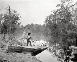 Rice Creek: 1890s