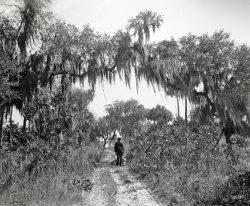 Rockledge Greenway: 1897