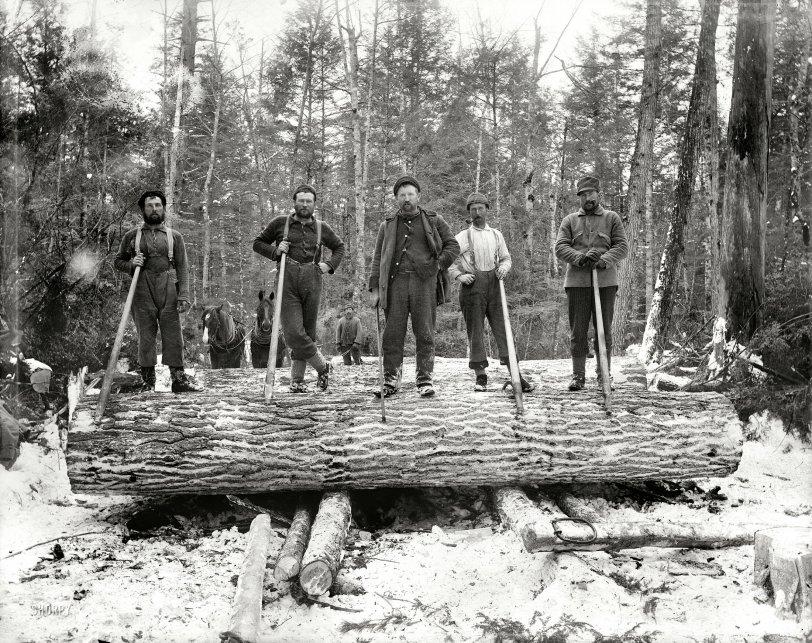 I'm a Lumberjack: 1899