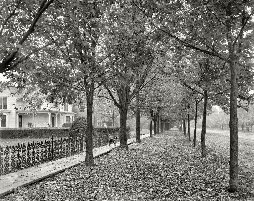Autumn Leaves: 1899