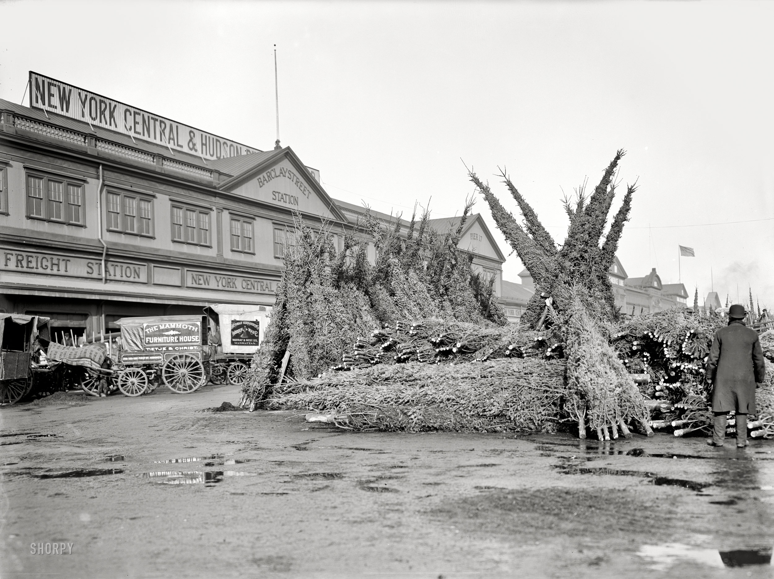 Shorpy Historic Picture Archive Christmas Tree Market