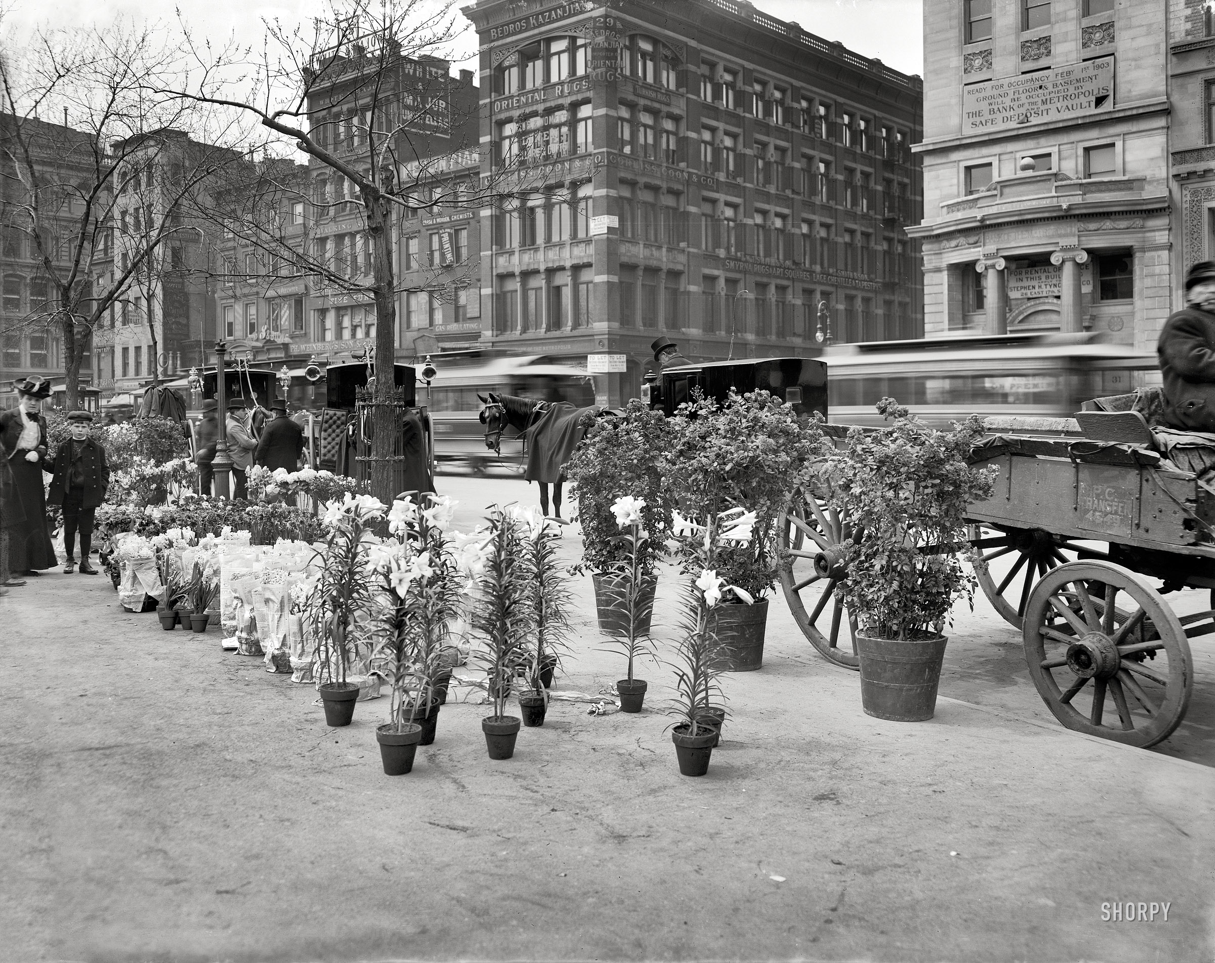 Shorpy historic picture archive easter lilies 1905 for Flowers union square nyc