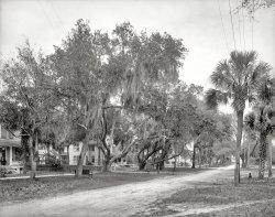 Oaks Aplenty: 1904