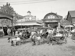 Moxie Kids: 1904