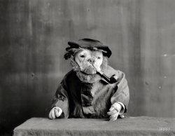 Smoking Bull: 1905