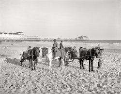 Pony Boys: 1905