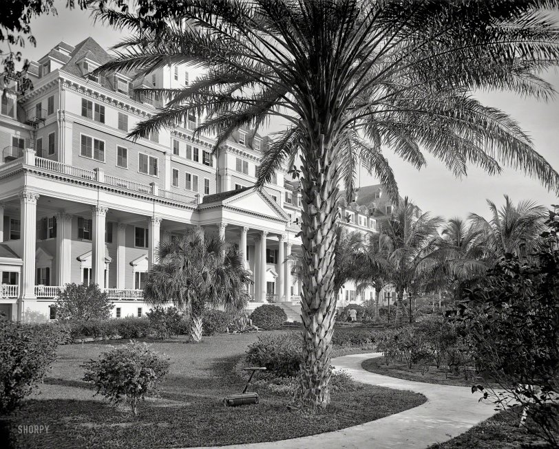 Poinciana Palms: 1902