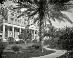 Poinciana Palms: 1902