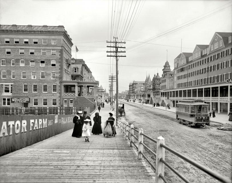 Gator Farm: 1905