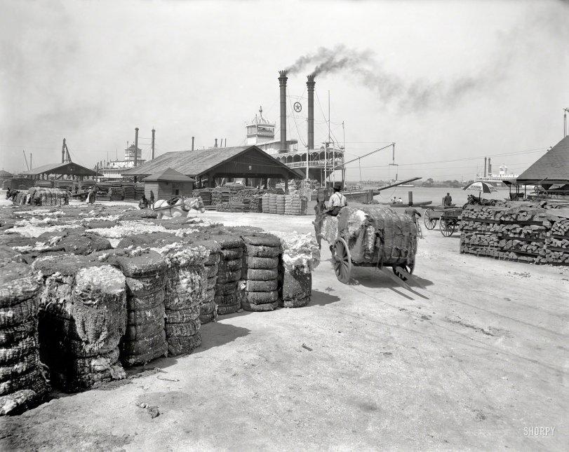 Great Bales of Fiber: 1905