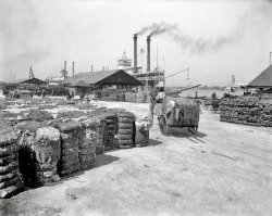 Great Bales of Fiber: 1905