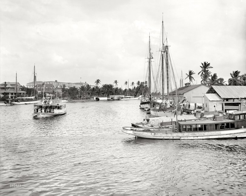 The Royal Palm: 1907