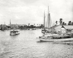 The Royal Palm: 1907