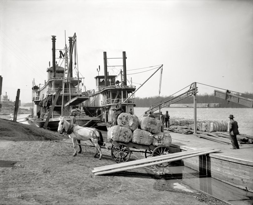 Cotton at the Levee: 1910