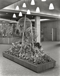 Bird Balls: 1957