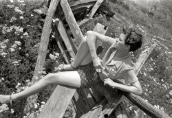 On the Fence: 1939