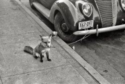 Ford Fox: 1940
