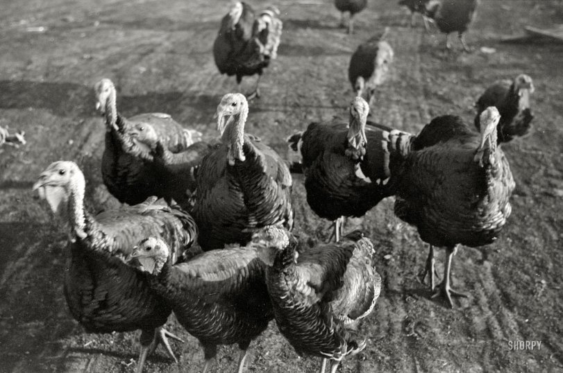 Gobblers: 1940