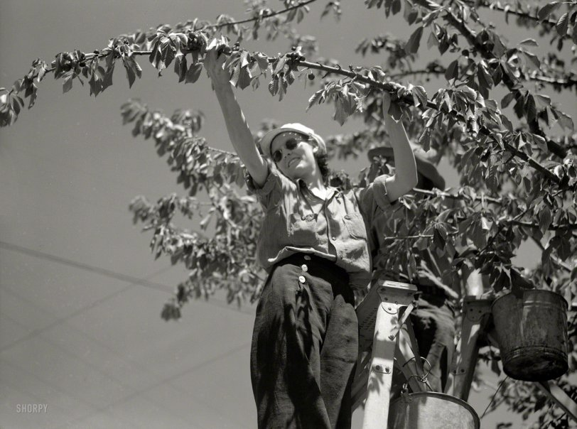 American Picker: 1936