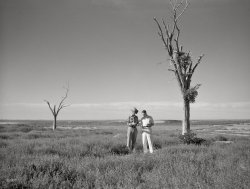 Texas Drought: 1936