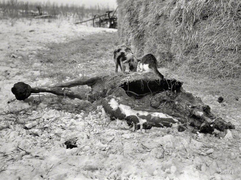 Barnyard Buddies: 1936