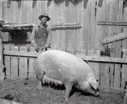 Mrs. Piggy: 1940