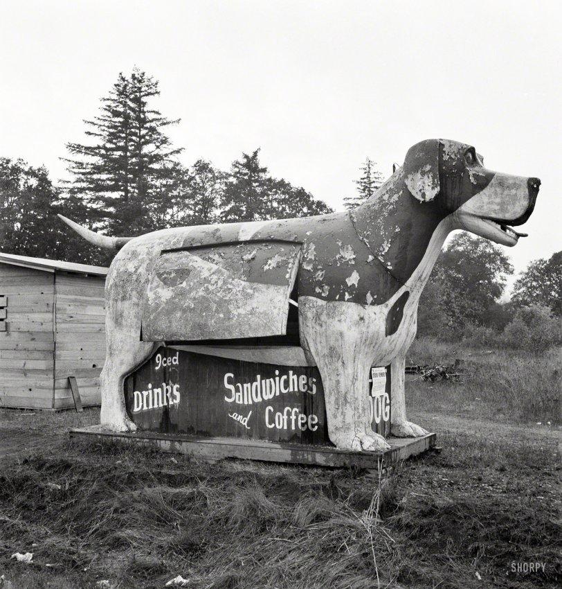 Lost Dog: 1939