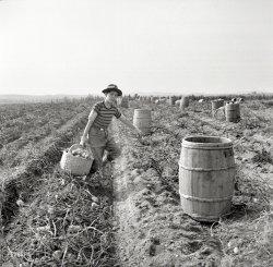 Tater Tot: 1940