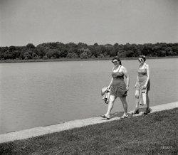 Waterbirds of Washington: 1942