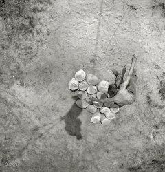 On the Ground: 1942